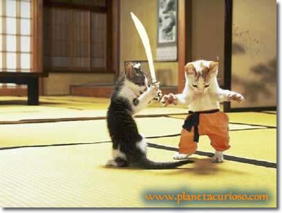 gatos_espadas1